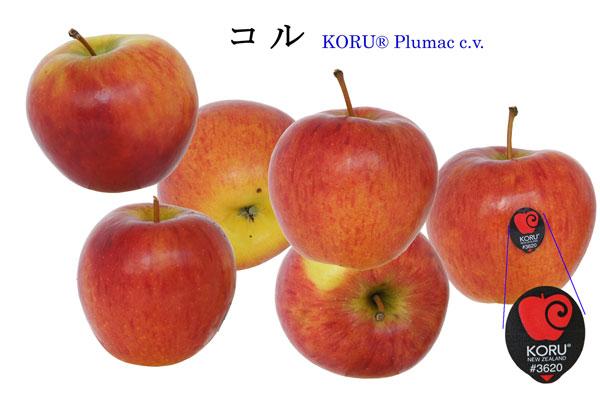 こる りんご